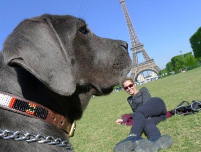 chien devant la tour eiffel