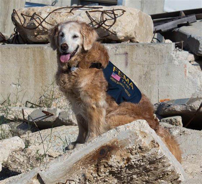 Bretagne, dernière chienne survivante du WTC
