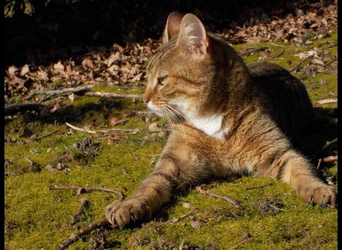 emeraude, la chatte dans l'herbe