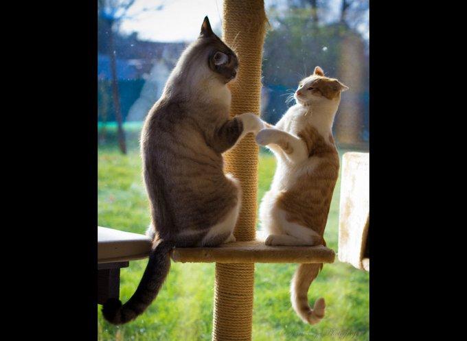 Fletcher & MacCoy dans leur arbre à chat