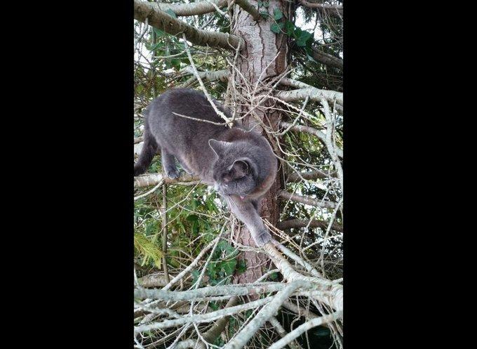 Le chat François dans son arbre