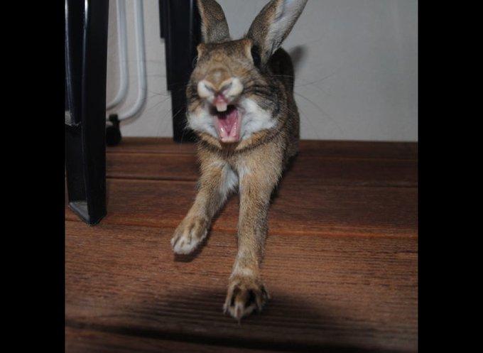 Mimi le lapin qui sourit !