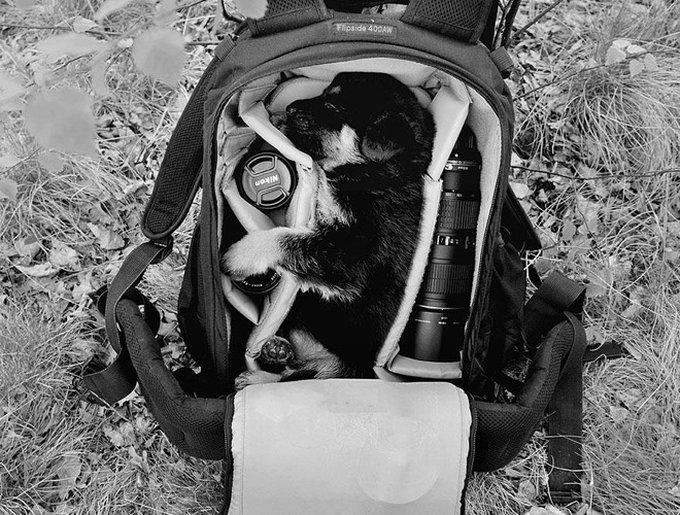 chien dans sac à dos