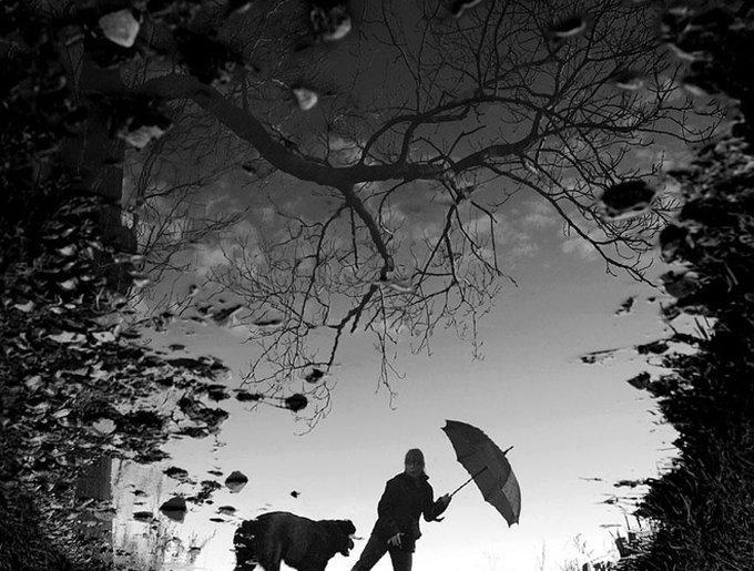 enfant promène chien parapluie