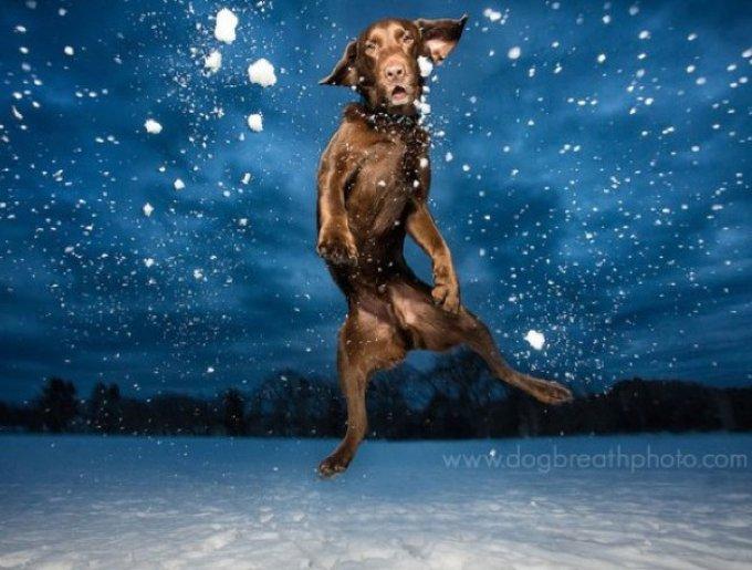 chien saute nuit
