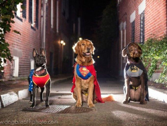chiens super-héros