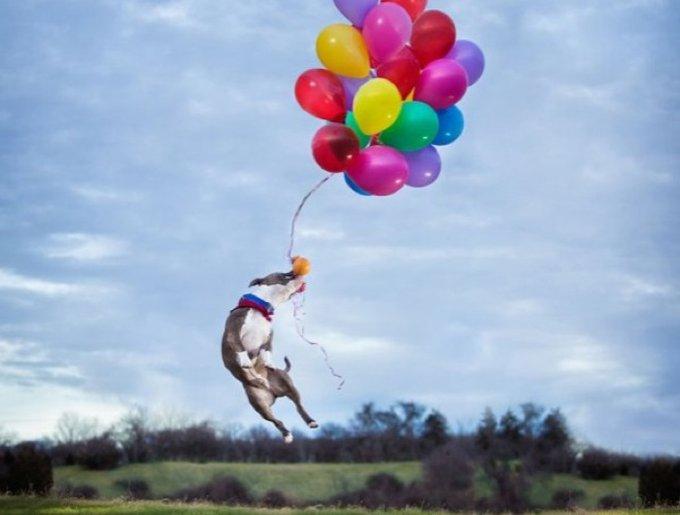 chien s'envole balons