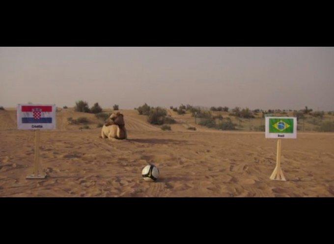un chameau pronostic les équipes de football