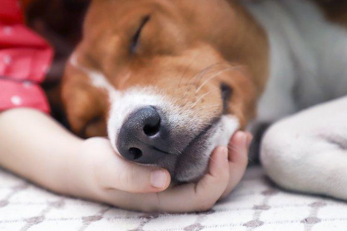 La diarrhée chez le chien, causes et traitements.