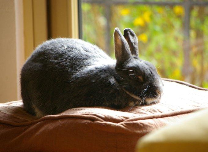 Ptitchou, le lapin qui dort