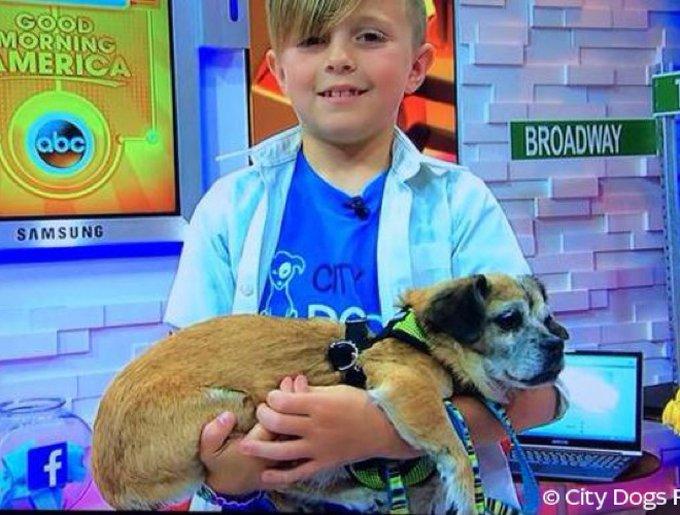 Le petit garçon avec un chien dans les bras