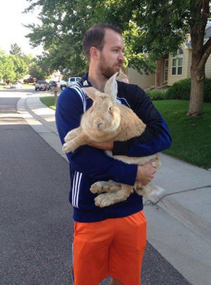 Un homme retrouve un lapin géant