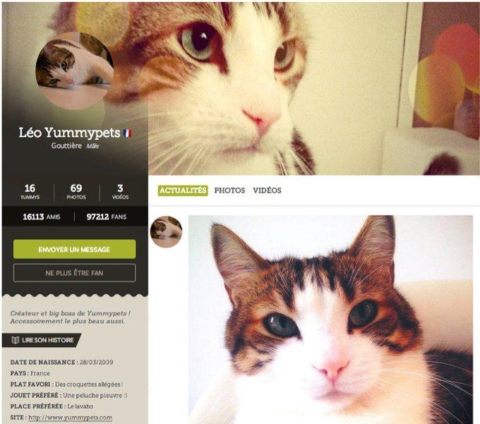 les nouveaux profils yummypets