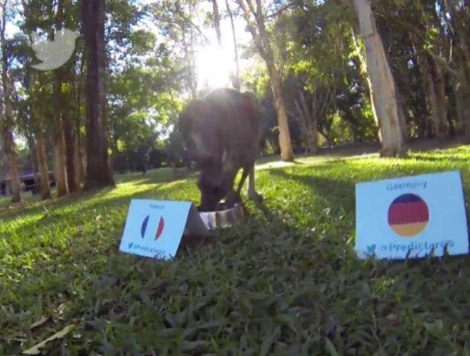 blog_yummypets_predictaroo_kangourou_07_14