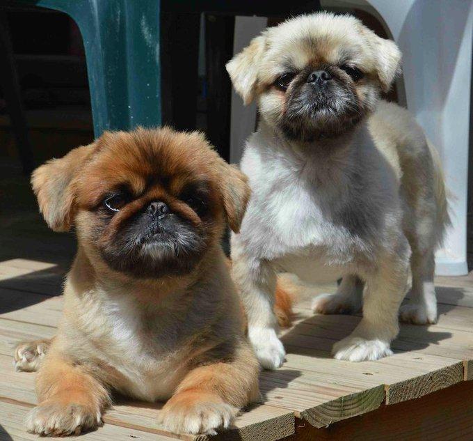 Dicky et son amis, un chien handicapé