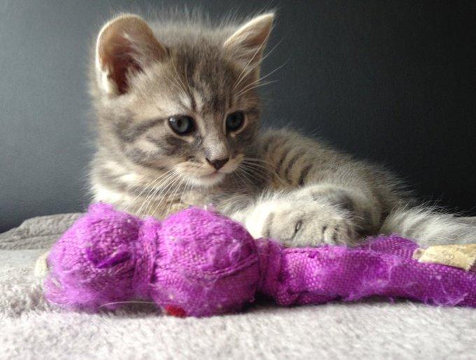 Sanka, le chaton gagnant avec son doudou