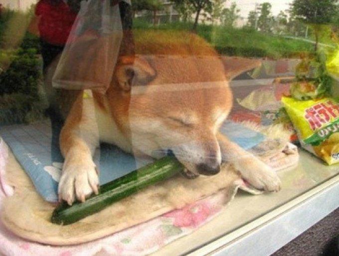 blog_yummypets_chien_buraliste1_08_14