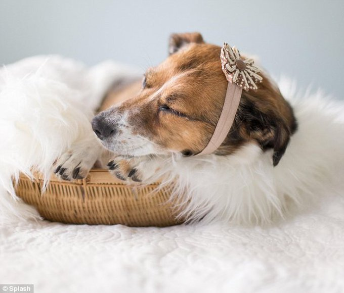 blog_yummypets_chien_famille18_08_14
