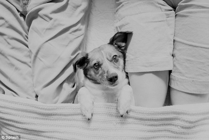 blog_yummypets_chien_famille1_08_14