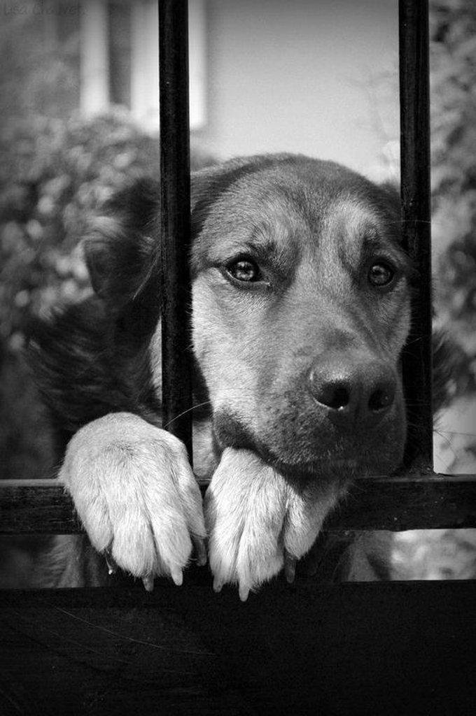La photo d'Helfy contre l'abandon des animaux
