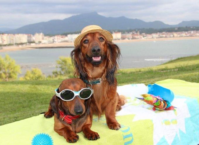 les gagnants des jeux concours photo animaliers