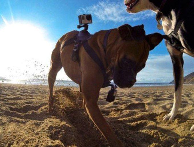 Des chiens et une Go Pro