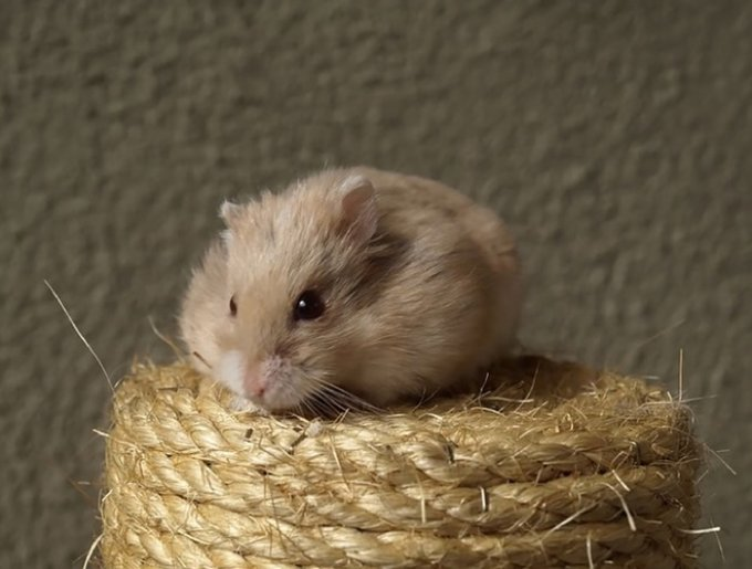 blog_yummypets_hamsters_08_14