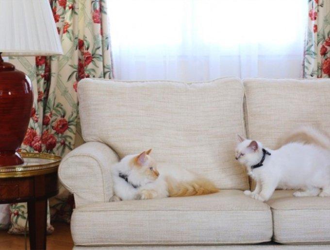 blog_yummypets_kleopatre_bristol2_08_14.jpg