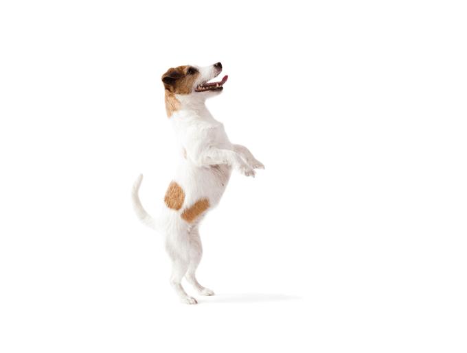 blog_yummypets_apprendre_chien_debout_09_2015