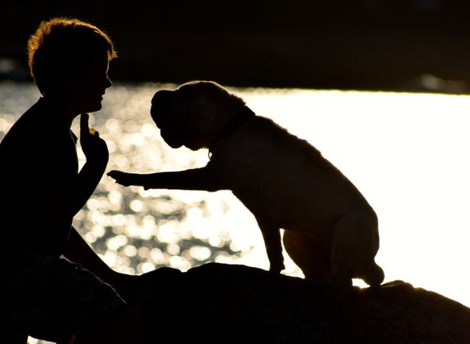 Melba le chien illustre l'adoption