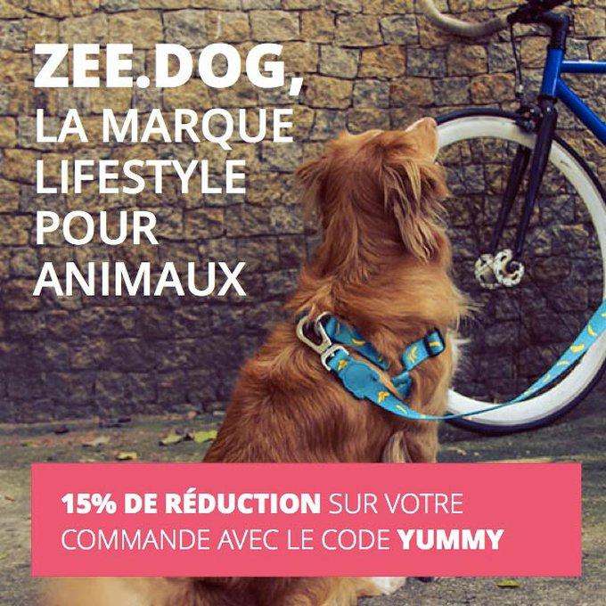 blog_yummypets_zeedog_06_09_2015