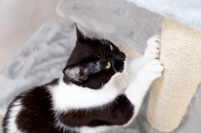 un chat fait ses griffes partout