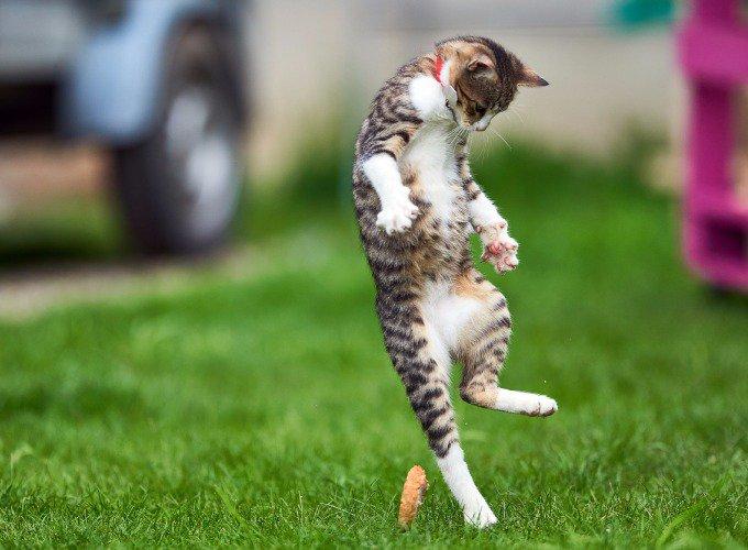 cat-quiz