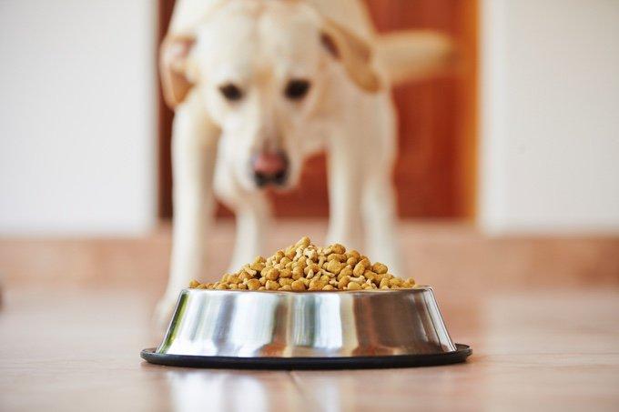 blog_yummypets_10_signes_qui_montrent_que_la_nourriture_de_votre_chien_nest_pas_adaptée_02_10_2015