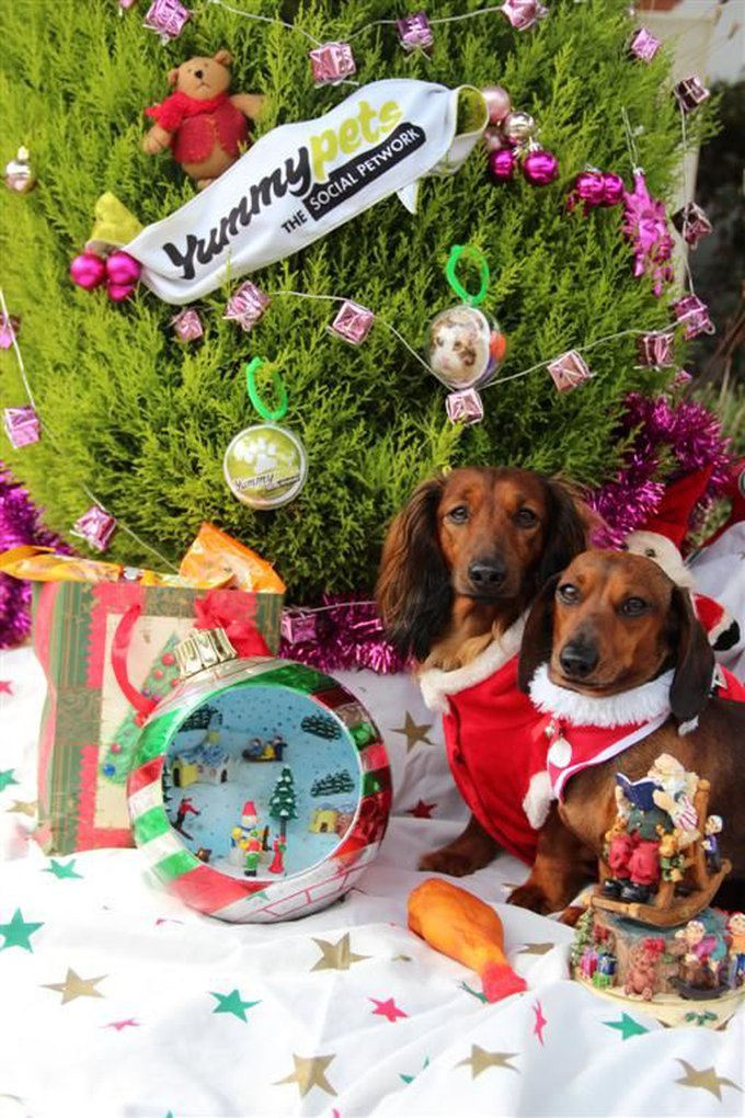 blog_yummypets__jeu_concours_gagnant_10_2014