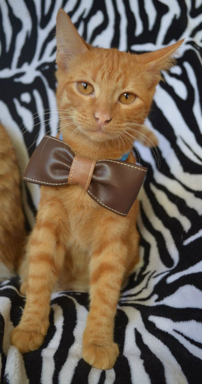 blog_yummypets__jeu_concours_gagnant_10_2014_4