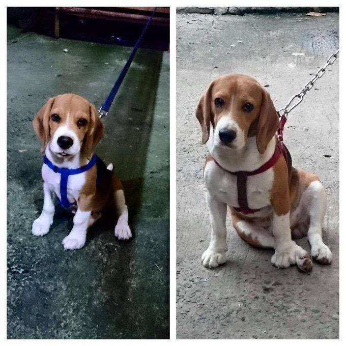 blog_yummypets_avant_apres_evolution_chiens_10_10_2015