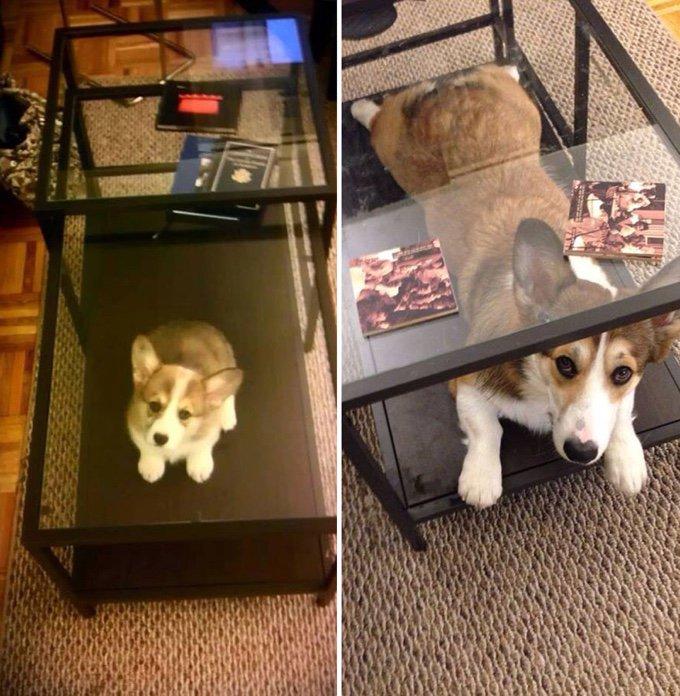 blog_yummypets_avant_apres_evolution_chiens_14_10_2015