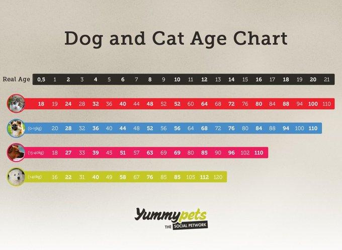 blog_yummypets_dog_and_cat_age_chart_10_14