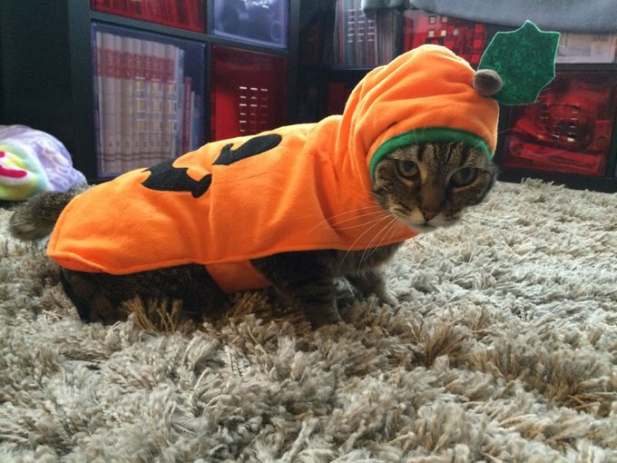 blog_yummypets_jeu_concours_gagnant_10_2014_5