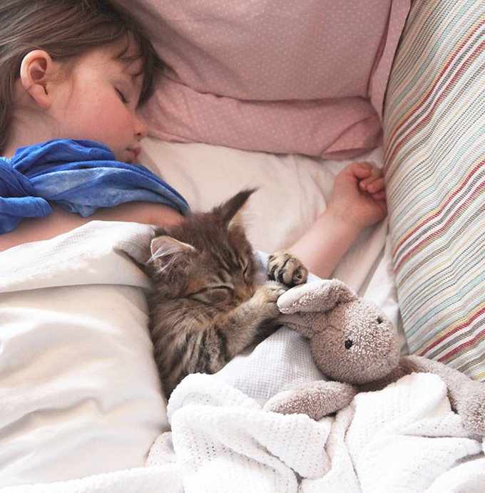 blog_yummypets_thula_maine_coon_chat_therapeutique_10_2014_1