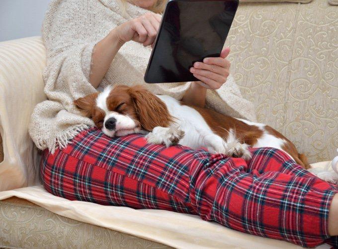 chien allongé sur sa maîtresse