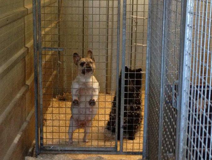 blog_yummypets_sauvetage_chats_chiens_1_2015