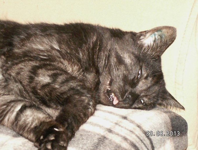 blog_yummypets_concours_photos_02_2015