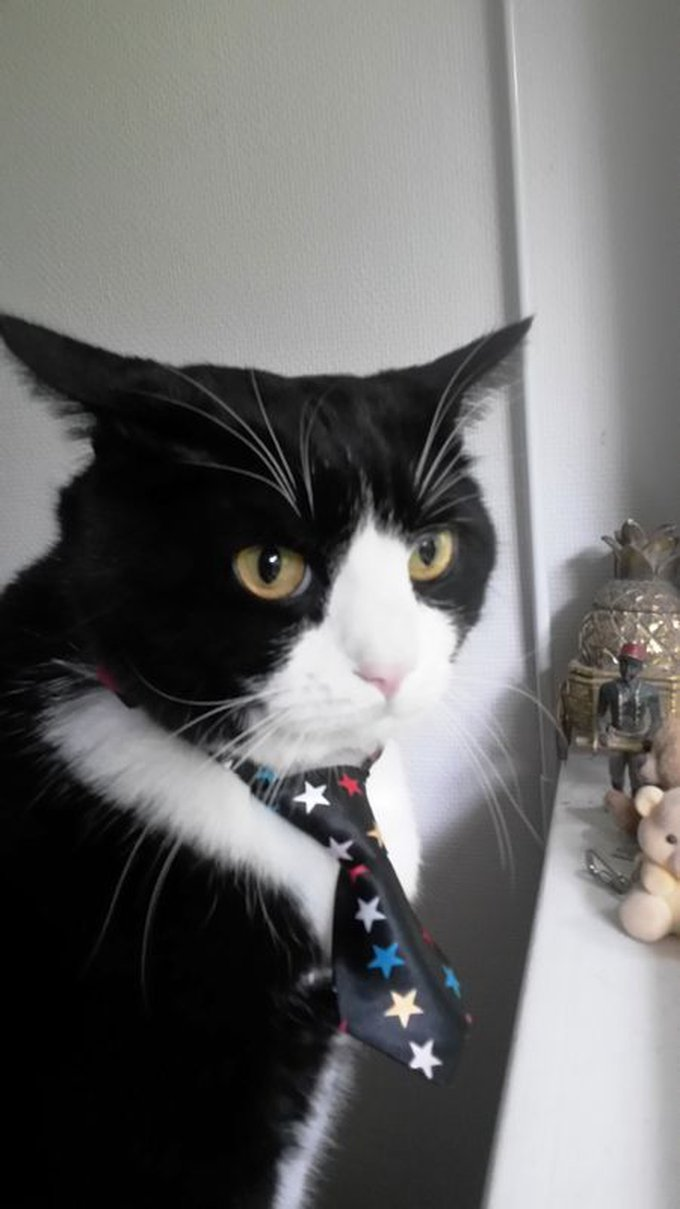 blog_yummypets_concours_photos_02_2015_6