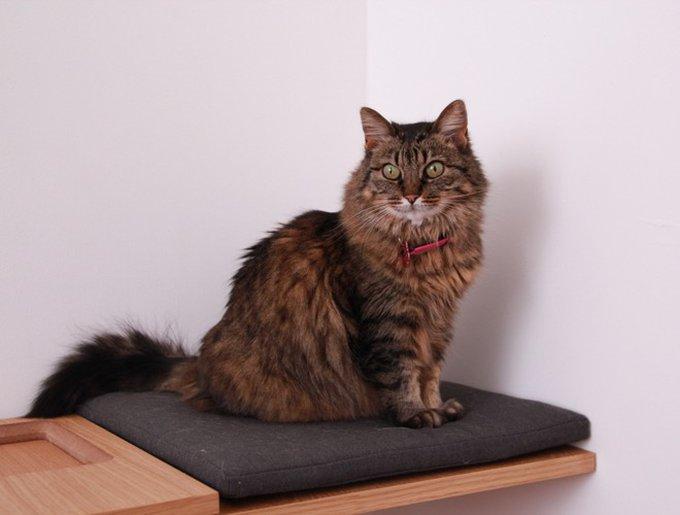Foufounette sur Oscar, arbre à chat Felinea