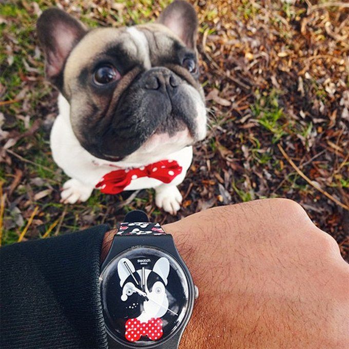 Andy le bulldog et sa montre Swatch
