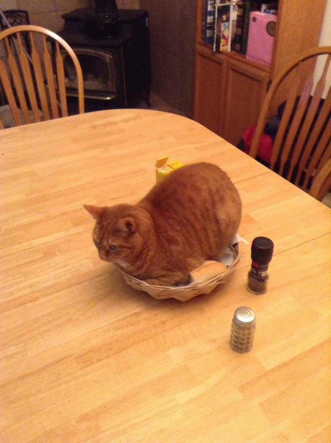gatos arruinando la comida