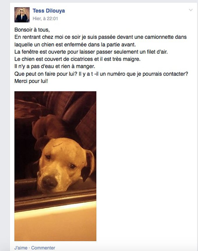 blog_yummypets_wanted_le_chien_04_2015_2