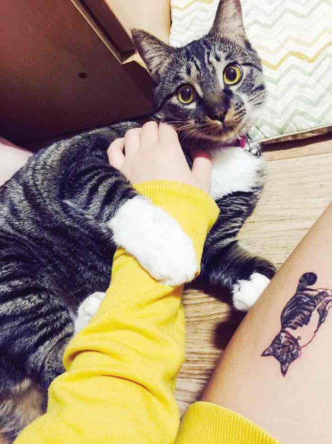 blog_yummypets_tatouage_chat_05_2015_1